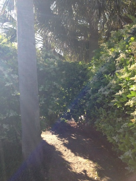 You had to go through this little hedge maze to get to the beach. It made me think of Narnia for some reason.