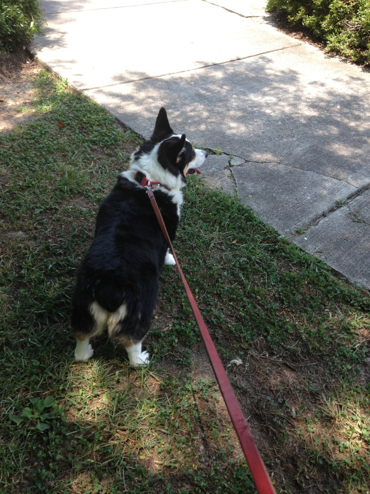 Lessons Learned From Walking The Dog (2/6)