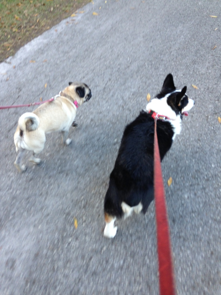 Lessons Learned From Walking The Dog (4/6)