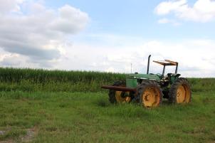 A common sight in the Georgia farmlands.