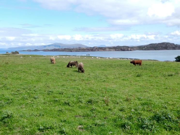 Pastoral Scene on Iona