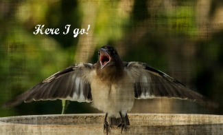 Here I Go baby bird