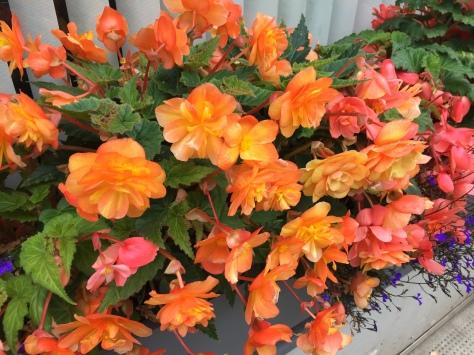 Peachy window box flowers