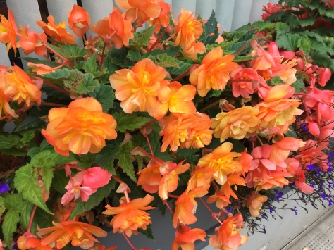 Peachy window box flowers