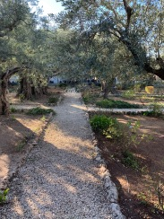 Cross-shaped pathway among olive trees