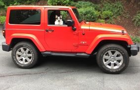 Black, white and tan corgi looking out passenger window of a bright red jeep