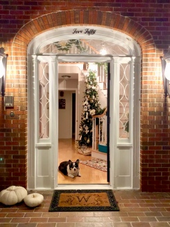 Looking into the white, opened door of a red brick home you see a black and white corgi in front of a Christmas tree