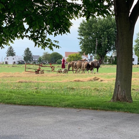 Amish girl working in a field