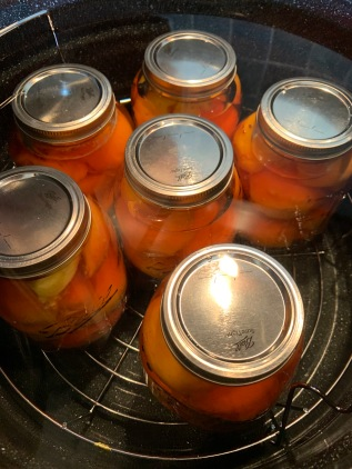 Jars of peaches in canning pot