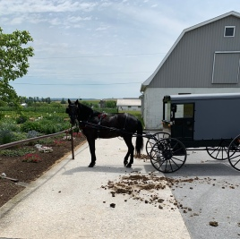 Horse tied to hitching post with buggy