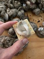 Yummy Oyster
